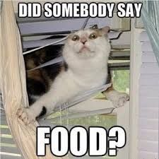 #catsmemes,funny animal pictures, cat memes, just like cat, funniest animals, cat fun, cat funny, cat, cats, cat cute, cat stuff,#funny, #funnyanimals, #funnycats Tap the link for an awesome selection cat and kitten products for your feline companion! Bow Chicka Meow Meow