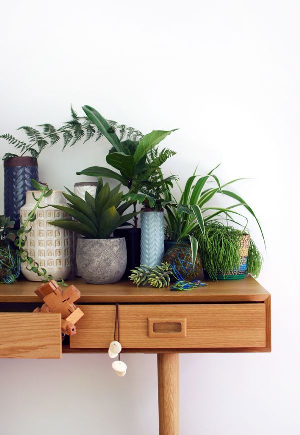 house plants, succulents, cactus and indoor gardens | potted plants and botanical design for the indoor garden