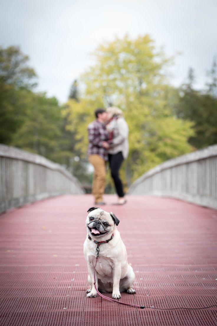 Everyone needs their fur babies in their engagement pics!  #blackcapphotography #engagementpics #pug #wedding #gaywedding #lgbt
