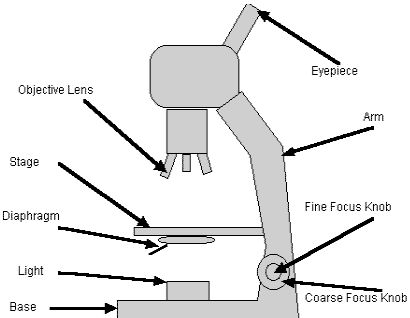 13 best microscope images on pinterest microbiology ap biology microscope parts diagram ccuart Choice Image