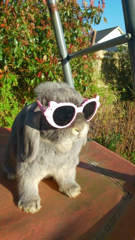 That's a fab bunny! #sunglassesinspiration #inspiredshades