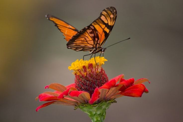 Beneficial Garden Insects: Five Way to Attract Them