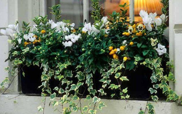 Les 48 meilleures images du tableau jardini re d 39 automne for Idees plantations exterieures