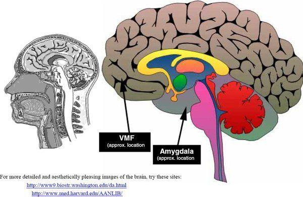 anterior cingulate cortex – Inside The Alcoholic Brain