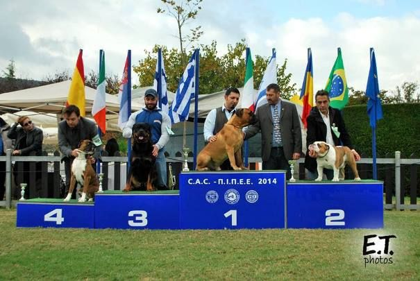 A great end for the Greek Dog Show Season 2014
