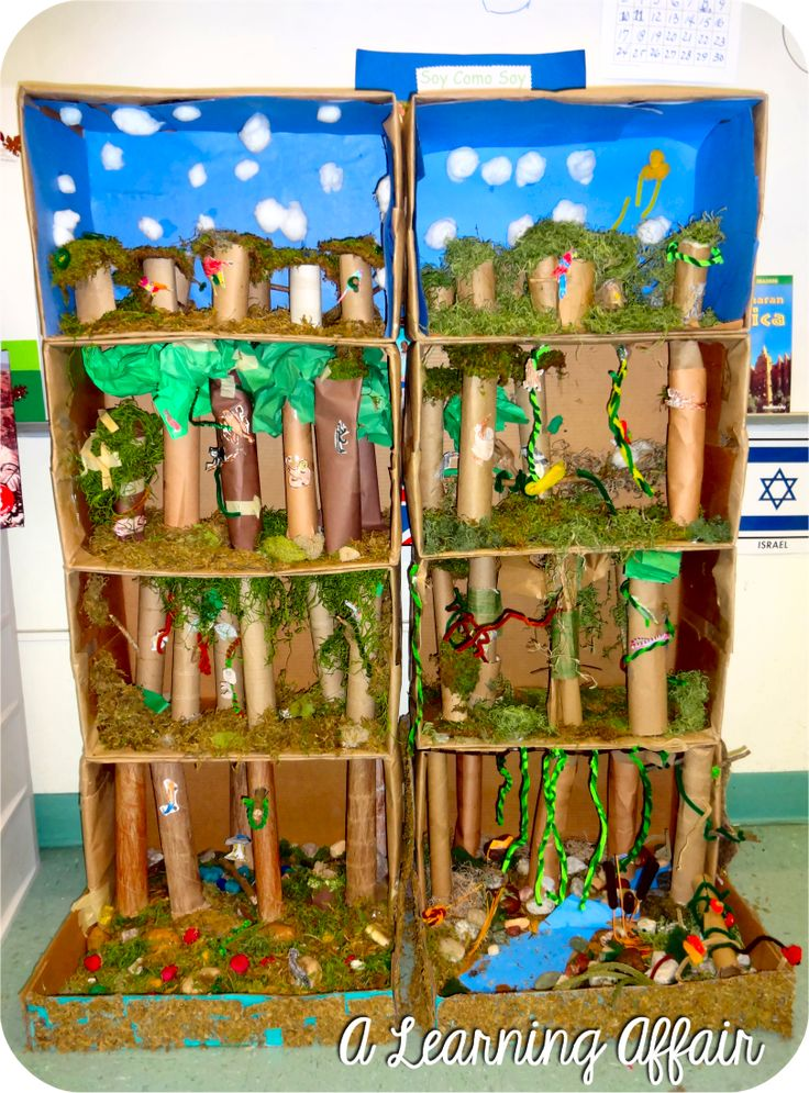 *A Learning Affair*- Layers of the Rainforest 3-D Diorama
