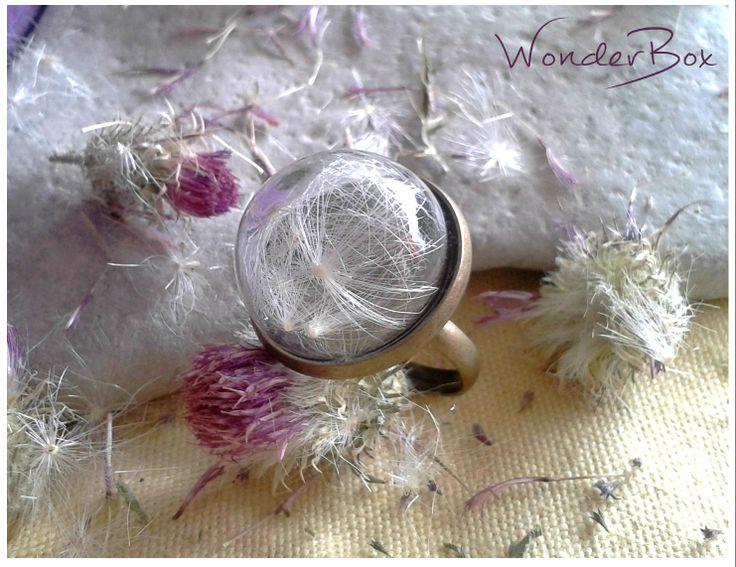 ~ Carduus acanthoides ~