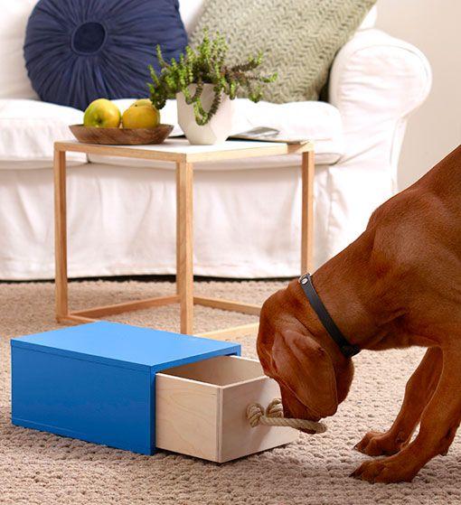 juguete interactivo para perros hecho en casa