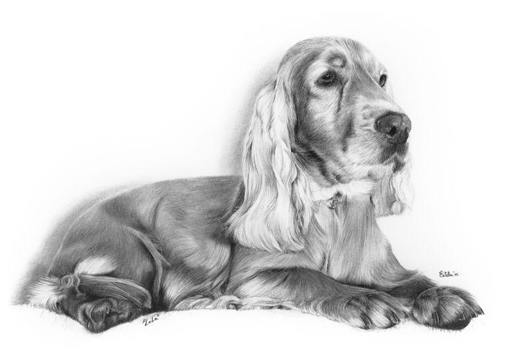 | Retrato perro carboncillo | Retratos Carbocillo | Estela | Retratos Valencia | http://joseantonioestela.blogspot.com Charcoal Portrait