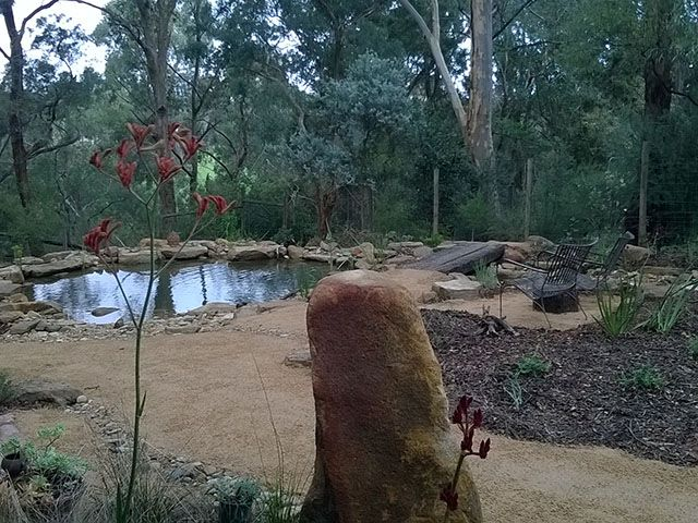 A large honey granite boulder flanked by Kangaroo paws