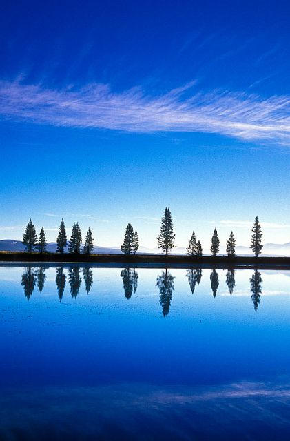 Lodgepole pine trees refelcted on a calm morning near Yellowstone Lake, Yellowstone National Park, Wyoming