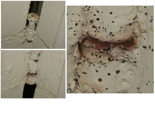 Pictures of signs of bed bugs on mattresses and other hiding places, including bed bugs, eggs, fecal stains and cast skins. These photos give you a good idea of what to look for and where to look.