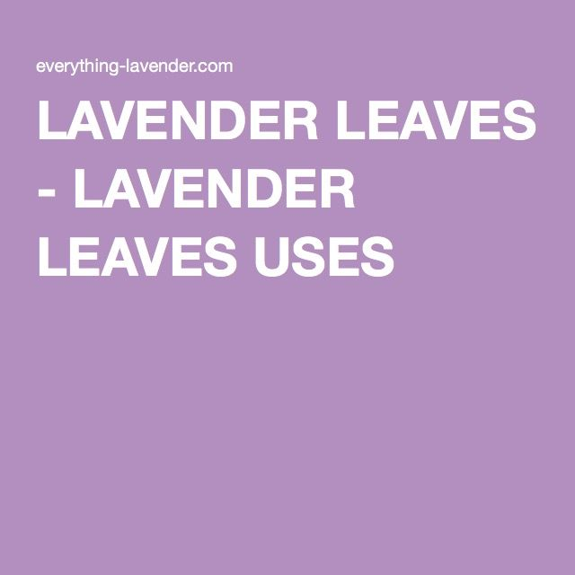 LAVENDER LEAVES - LAVENDER LEAVES USES