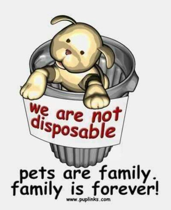 Pets are family!!! And if you can't treat em as such DONT HAVE THEM!!!!