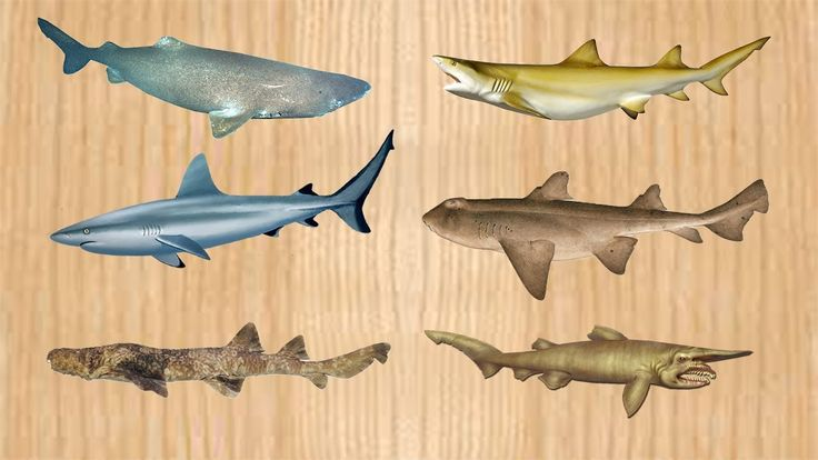 Shark Names Sea Animals for Children Toy Videos For Kids, Wrong body Sha...
