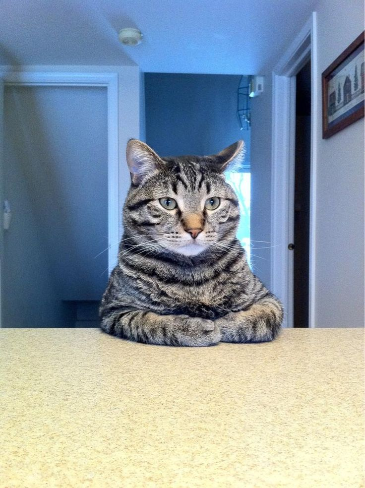 time for that talk about catnip.