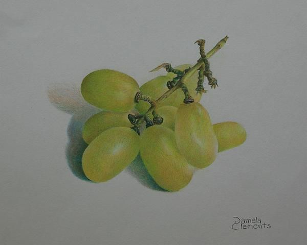 Colored Pencil Grapes Drawing