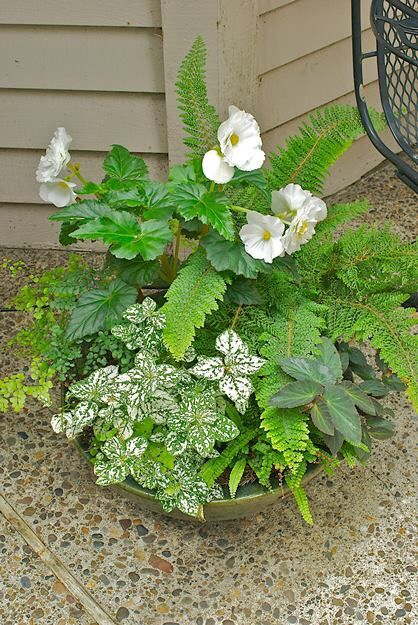 68 Best Mixed Variety Pots Images On Pinterest