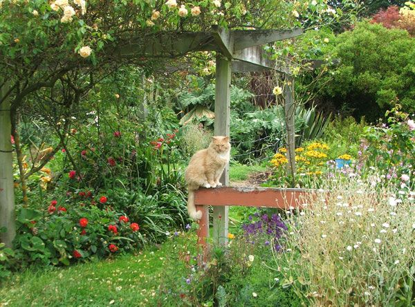 Fluff Fluff The Garden Supervisor Cat By The Pergola
