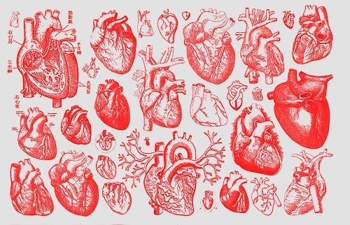 225 Best My Beating Heart Images On Pinterest: 17 Best Ideas About Heart Illustration On Pinterest