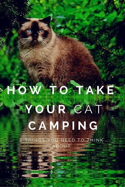 So if you are thinking about take your cat camping, what do you need to think about before you head out?   Here are 6 things to ponder.