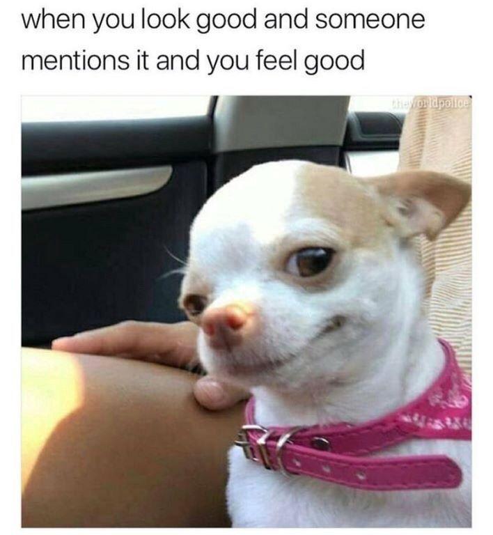 lustiger Hund Meme sauber lustiger Hund Meme 2019 Hund Meme Gesicht süßer Hund Meme Hund Meme …   – Funny