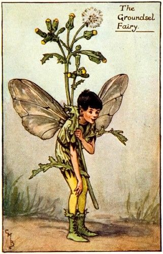 Cicely Mary Barker Groundsel  Bookplate chromolithograph for 'Flower Fairies of the Spring', printed by Blackie & Sons, London, c.1930. #fairies #illustration