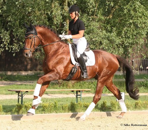 Christoph Hess: Ride Like a Dressage Professional