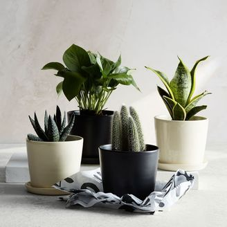 Plants delivered to your door! Check it out.