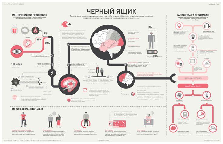 Инфографика о головном мозге