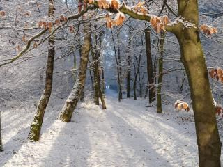 In de winter kamperen op de Veluwe