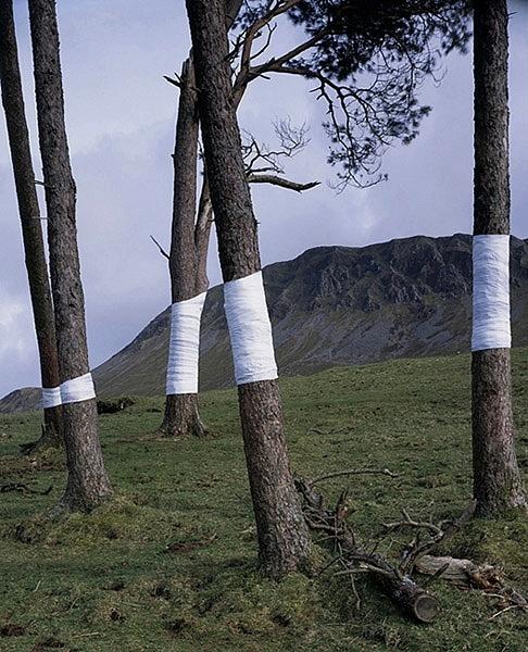 Untitled (Cader) 2008
