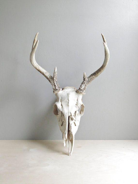 natural history / deer antlers & skull by ohalbatross on Etsy