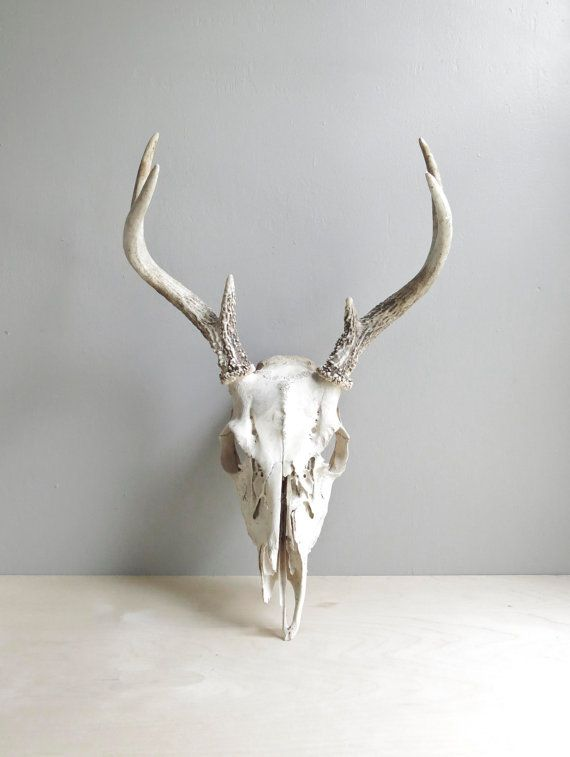 natural history / deer antlers & skull van ohalbatross op Etsy, $64.00