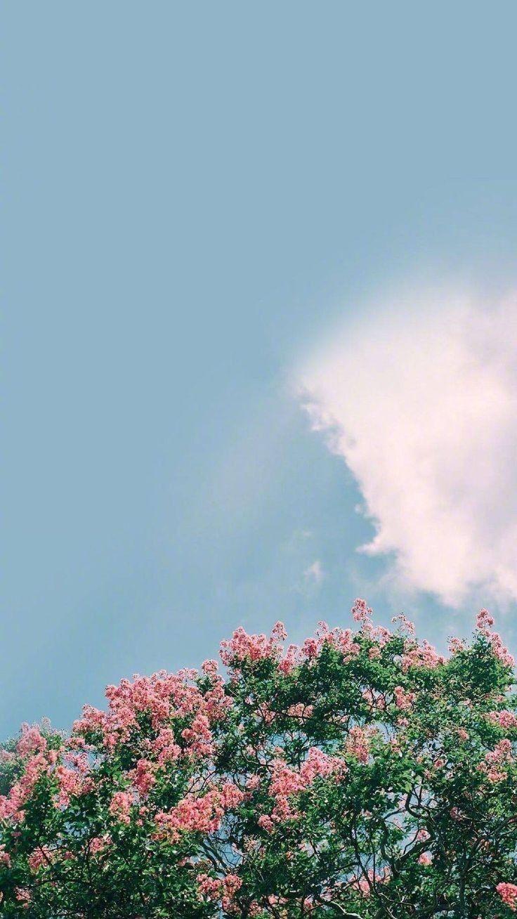 Pinterest Kayla Grace Grace Kayla Pinterest Flower Background Wallpaper Aesthetic Wallpapers Summer Wallpaper