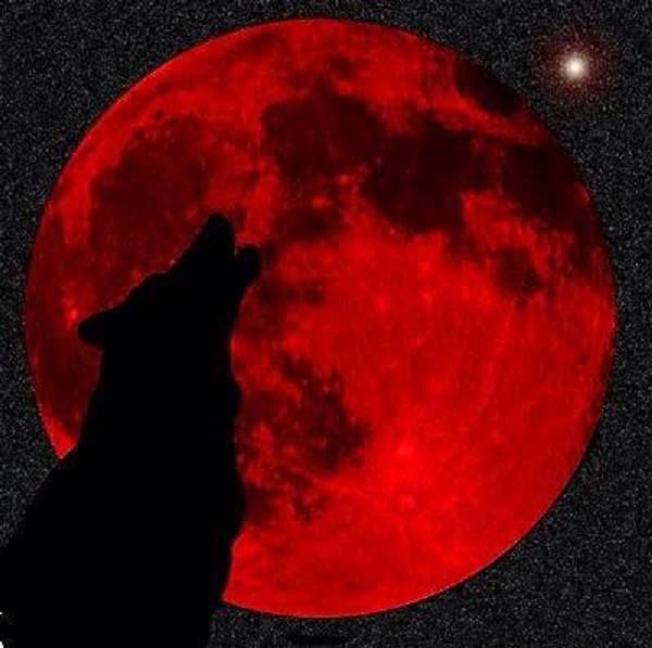Red Moon and the Wolf