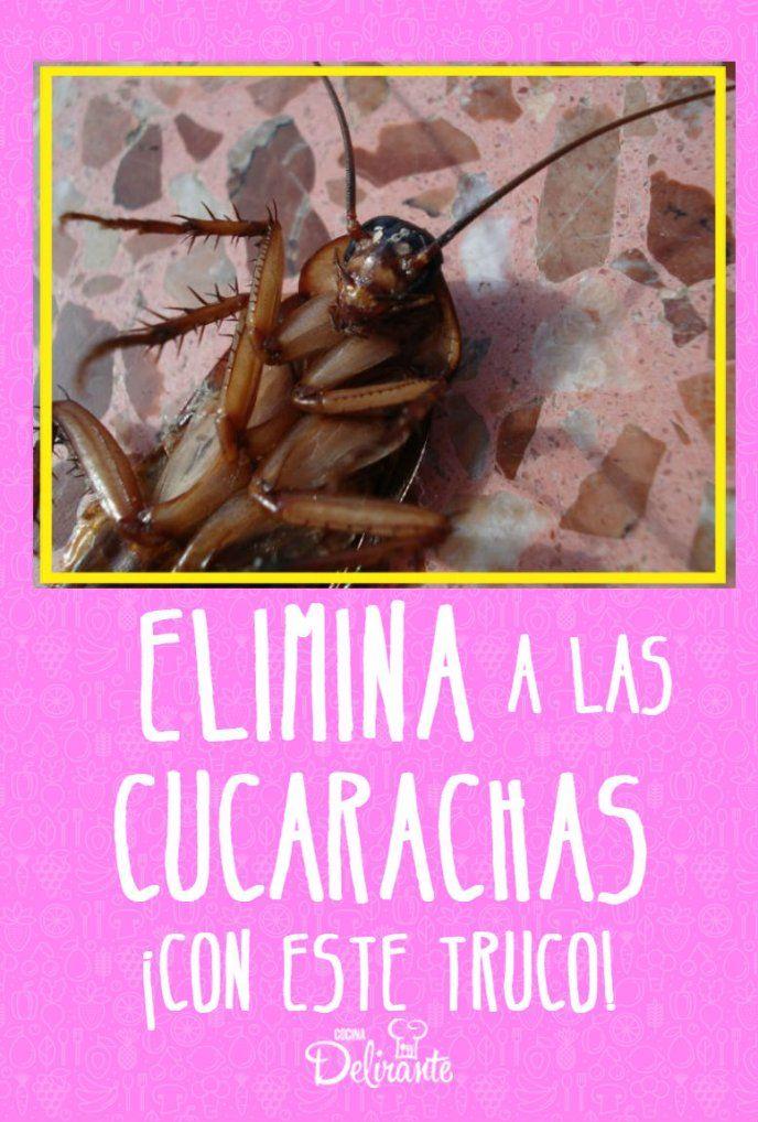 Elimina Las Cucarachas De Tu Cocina Con Este Truco Remedios Para Cucarachas Como Ahuyentar Cucarachas Cucarachas