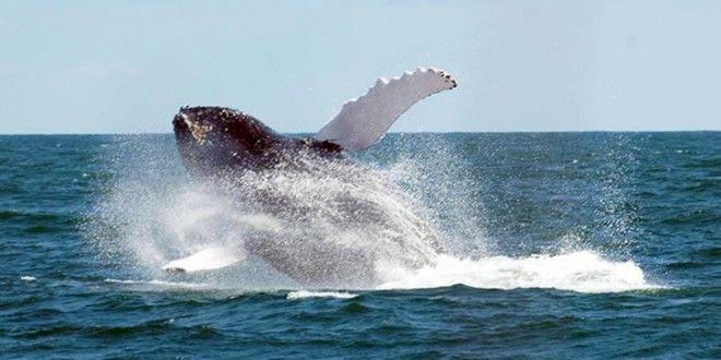 Nouvelles excursions au départ de Punta Cana pour observer les baleines