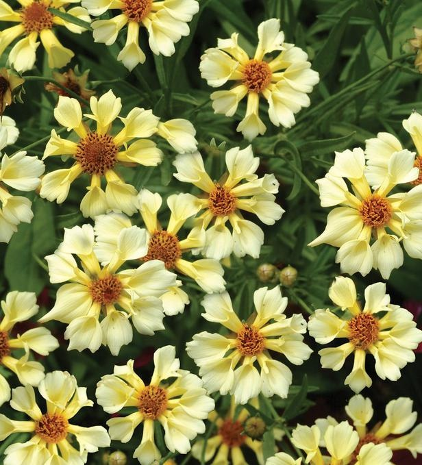"""101 best images about """"Perennials"""" ... Plants that come ..."""
