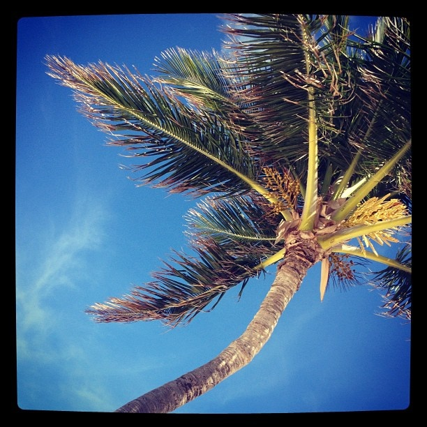 Nap under a palm? Don't mind if we do... Atlantis Paradise Island – Instagram