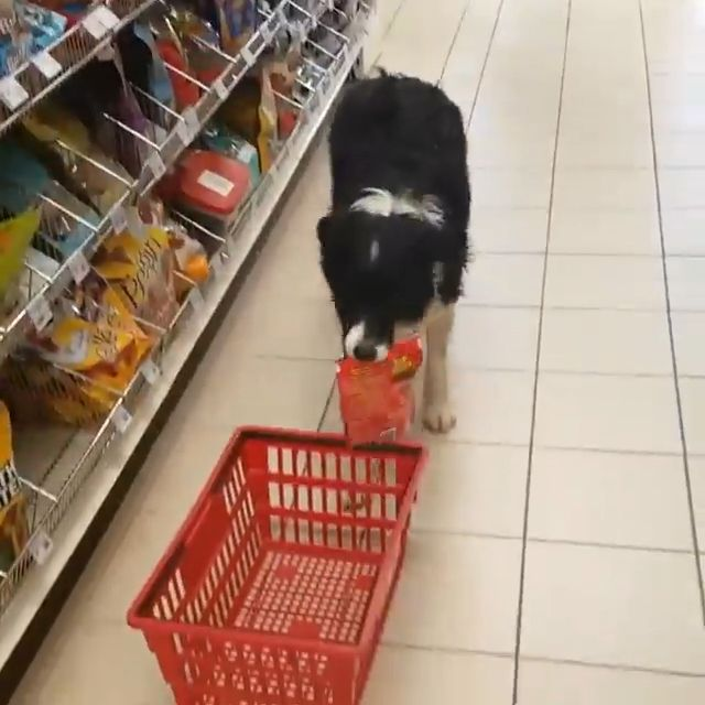 Dog Loves Shopping