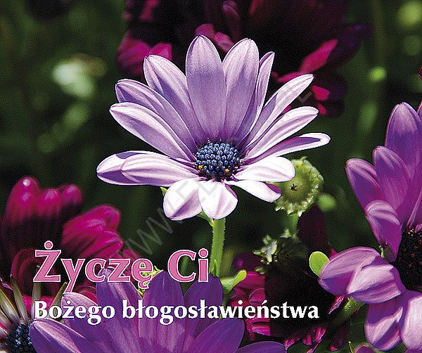 zycze_ci_bozego_blogoslawienstwa_perelka_215_0.jpg (600×502)