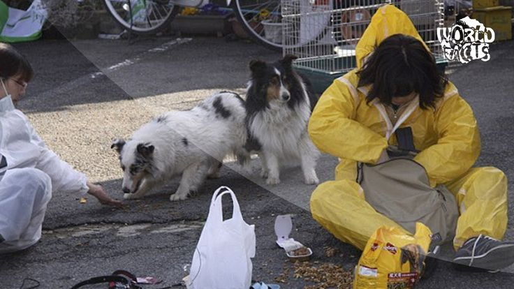 5 ANIMALE care SI-AU MANCAT STAPANUL