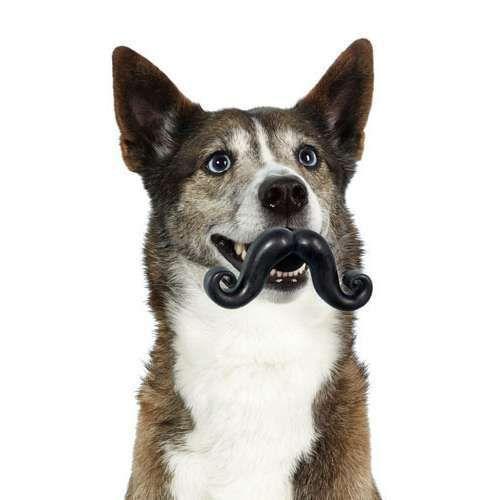 Mustache Dog Toy