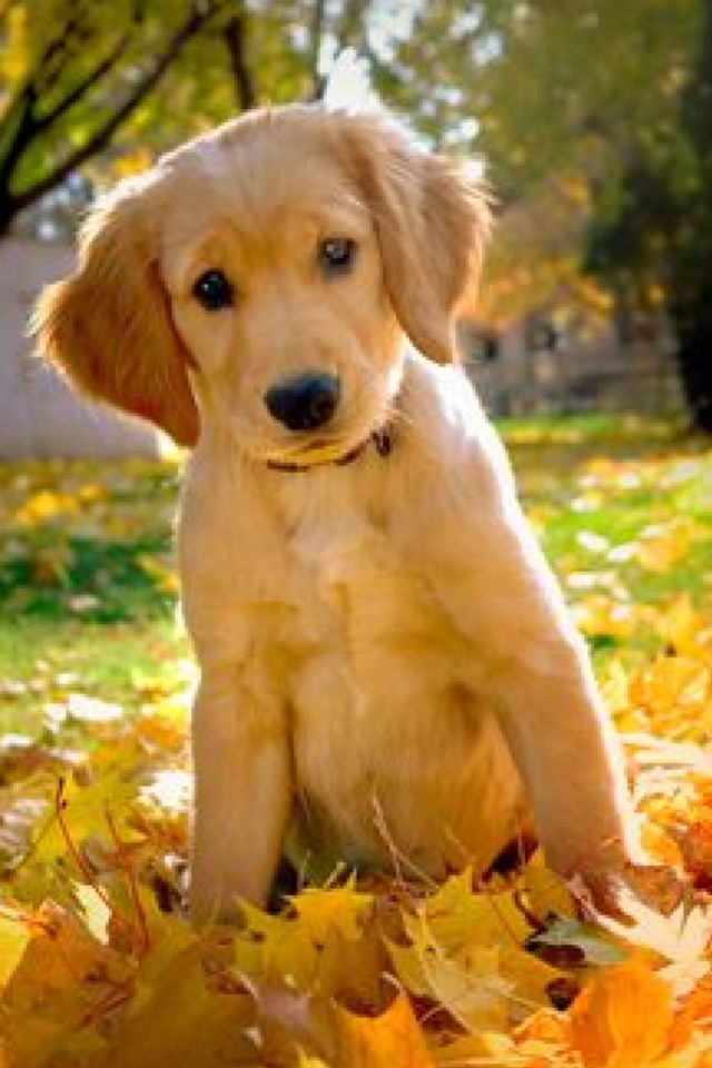 Golden in the Fall <3