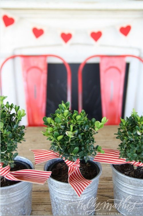 mini tins filled with boxwood and tied with a red & white striped ribbon // via Holly Mathis Interiors: cute idea for valentines day