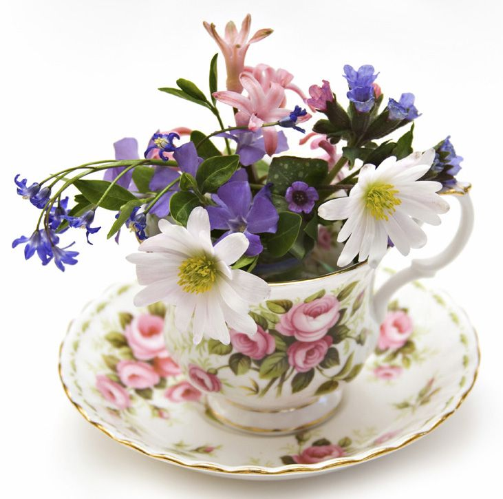 Teacup Flowers. Anemone blanda, squill, hyacinth, vinca minor and pulmonaria. 5 minute stroll around the garden in spring can yield this beautiful arrangement.