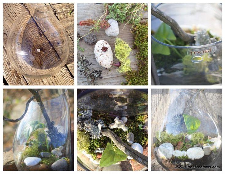 27 best the terrarium project images on pinterest indoor for Indoor gardening glasses