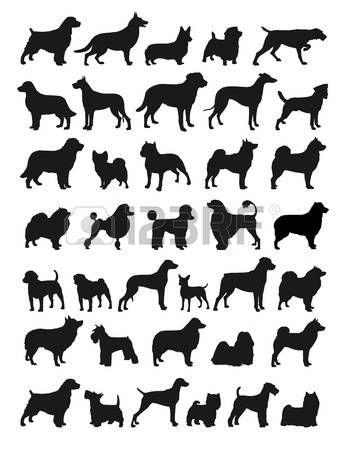Muchas especies de perros en silhouttes photo