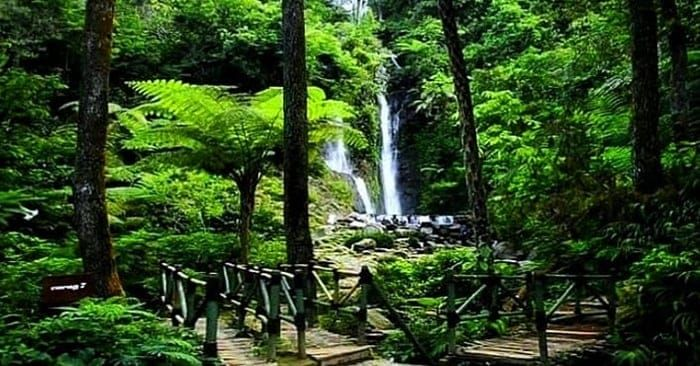 Curug Cilember Air Terjun Di Bogor Yang Menawan Di 2020 Air Terjun Taman Pondokan